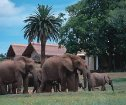 Gorah Elephant Camp, Addo Elephant Park Accommodation